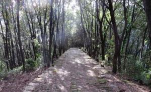 Italy Path
